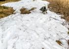 schon wieder Schnee für Clarence, war doch nicht der letzte vorige Woche