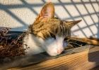 Gismo unsere Kräuterkatze