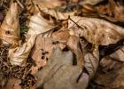 man konnte die Ameisen über die Blätter gehen hören