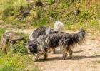 Clarence zeigt Tante Lucy seine Spazierwege