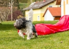 Clarence beim Agility-Training