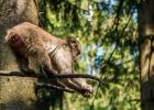 Makaken haben eine ausgezeichnete Balance