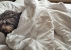 Sleeping Clarence - Ausnahmsweise im Bett (nur im Urlaub)