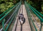 rüber über die wacklige Brücke