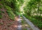 dem Forstweg der Raab entlang