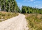 Auf der Forststraßen-Autobahn - ein Waldweg wäre mir lieber gewesen
