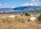 An Land ein paar Kühe, da schauten wir nicht schlecht