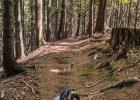 Der Wald macht es angenehm schattig