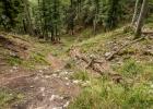 Steil durch den verwüsteten Wald