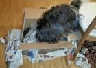 Clarence hilt beim Auspacken der Weihnachtsgeschenk
