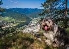 Bei einer Wanderung von Frohnleiten nach Mixnitz