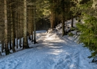zurück auf der Skitour-Autobahn durch den Wald