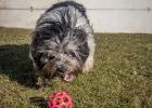 Zu Silvester spielen mit seinem Lieblingsball auf der grünen Wiese