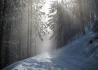 Die Sonne strahlt durch den Nebel und die Baumwipfel