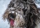 Happy Clarence - er freut sich, dass der Schnee noch da ist