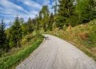 hier folgen wir ein längeres Stück der Forststraße