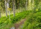 auf einem Waldpfad hinunter zum Schanzsattel