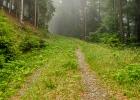 nicht hier entlang, sondern links steil den Jägersteig hinauf