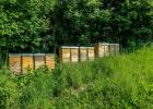 emsige Bienchen am Wegesrand