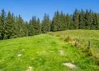 über die Almwiese in den Wald hinein