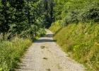auf Forststraßen zur Hochalm