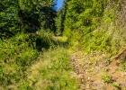 steil geht es eine alte Forststraße hinauf
