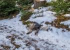 Clarence bei seiner Lieblingsbeschäftigung im Schnee