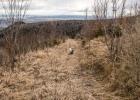 auf einem Forstweg am Zwölferkogel