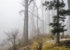 heute heißt es aber aus dem Nebel in den Nebel