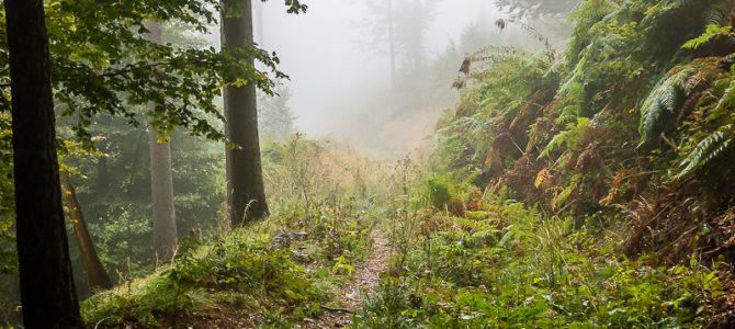 Gamskogel im Regen