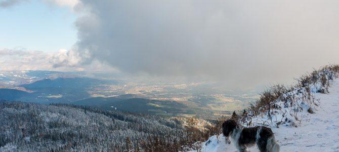 Erster Schneekontakt